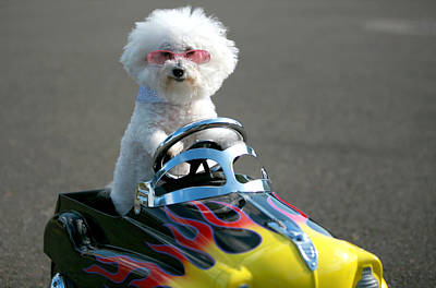 Fifi Goes For A Ride Print by Michael Ledray