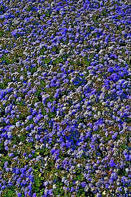Flower Carpet. Original by Andy Za