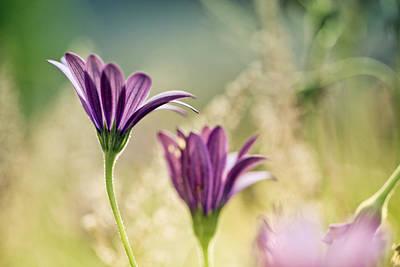 Gardening Photograph - Flower On Summer Meadow by Nailia Schwarz