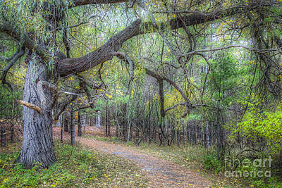 Northern Michigan Photograph - Forest In Sleeping Bear Dunes by Twenty Two North Photography