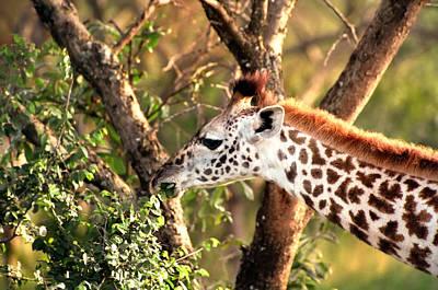 Giraffe Print by Sebastian Musial