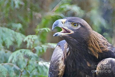 Washington Photograph - Golden Eagle by Sean Griffin