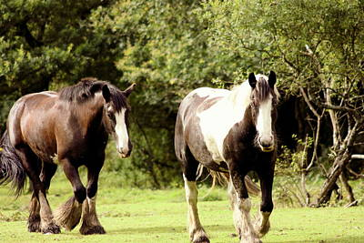Candid Mixed Media - Horses by Frances Lewis