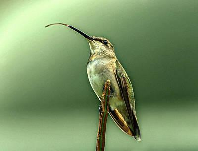 Hummingbird Print by Sandy Keeton