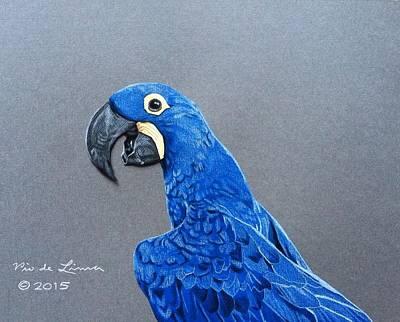 Hyacinth Macaw Print by Pio De Lima