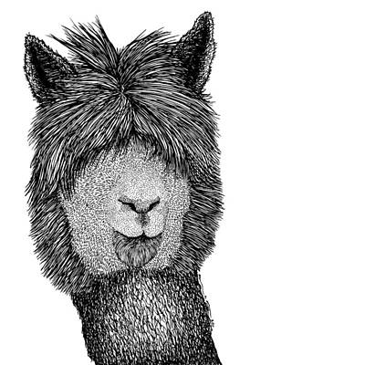 Llama Drawing - Llama by Karl Addison