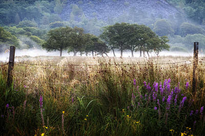 Baum Photograph - Llanberis - Wales by Joana Kruse