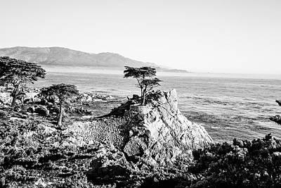 Photograph - Lone Cypress by Scott Pellegrin