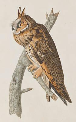 Owl Drawing - Long-eared Owl by John James Audubon