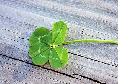 Good Luck Photograph - Lucky by Kristin Elmquist