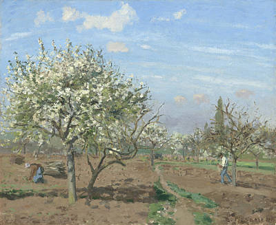 Fruit Tree Art Painting - Orchard In Bloom by Camille Pissarro