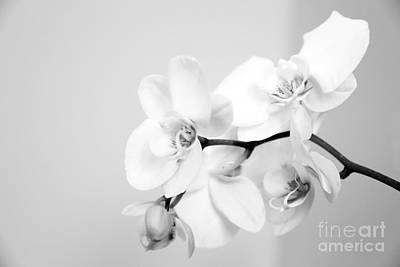 Orchids Digital Art - Orchid by Amanda Barcon