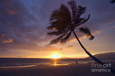 Hawaii Dog Photograph - Palm At Sunset by Ron Dahlquist - Printscapes