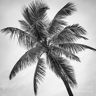 Palm Tree Print by Elena Elisseeva