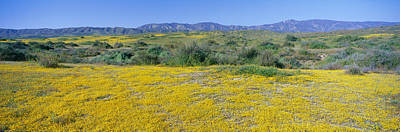Panoramic View Of Desert Gold Yellow Print by Panoramic Images