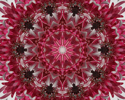 Pink Daisy Print by Michele Caporaso