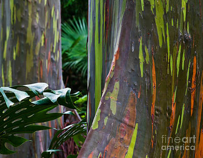 Rainbow Eucalyptus Print by Frank Wicker