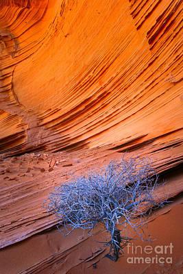 Rainbow Rocks Dead Bush #1 Print by Inge Johnsson