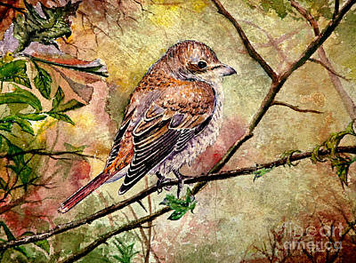 Yellow Beak Painting - Red Backed Shrike by Andrew Read