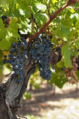 Red Vines Print by Ulrich Schade