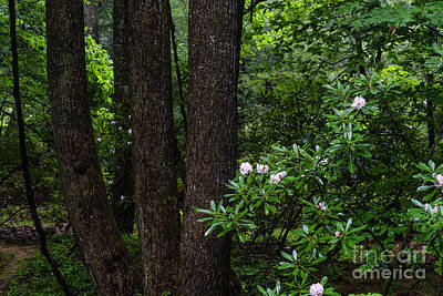 Rhododendron Forest Print by Thomas R Fletcher