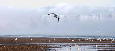 Seagull Print by Svetlana Sewell