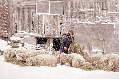 Sheep Photograph - Sheep In Underhill, Vermont. by George Robinson