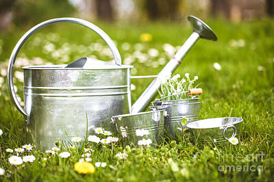 Garden Photograph - Spring Garden by Mythja Photography