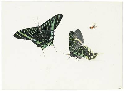 Bass Painting - Studies Of Two Butterflies by Anton Henstenburgh