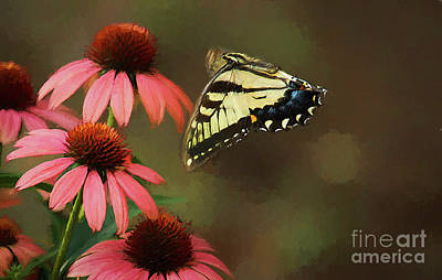 Butterfly In Flight Photograph - Summer Flight by Darren Fisher