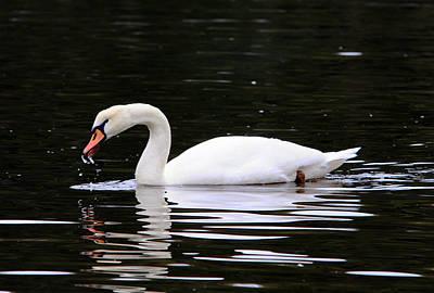 Eagls Digital Art - Swan Song by Aron Chervin