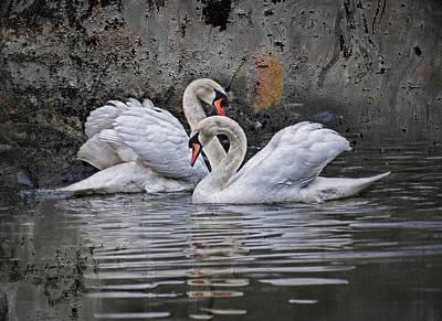 Swans Photograph - Tango Of The Swans by Joachim G Pinkawa