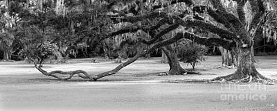 South Louisiana Photograph - The Giving Tree by Scott Pellegrin