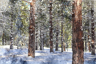 Majestic View Digital Art - Trees Covered In Snow by Brandon Bourdages