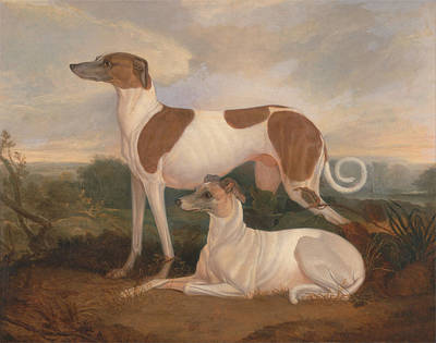 Greyhounds Painting - Two Greyhounds In A Landscape by Charles Hancock