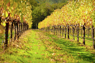 Grapes Photograph - Vineyard In The Fall by Brandon Bourdages