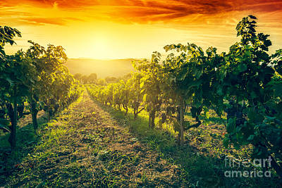 Vineyard In Tuscany, Italy Print by Michal Bednarek