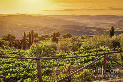 Sun Photograph - Vineyard Landscape In Tuscany, Italy. Wine Farm At Sunset by Michal Bednarek