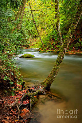 Sustain Photograph - Whatcom Creek by Idaho Scenic Images Linda Lantzy