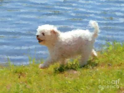 Puppy Mixed Media - White Little Dog by Miroslav Nemecek