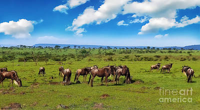 Tourist Attraction Digital Art - Wildebeest by Charuhas Images