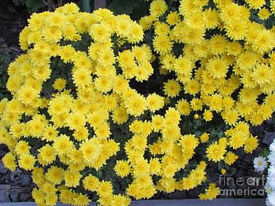 Photograph - Yellow Flower by Joyce Woodhouse