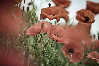 Poppy Meadow Print by Nailia Schwarz