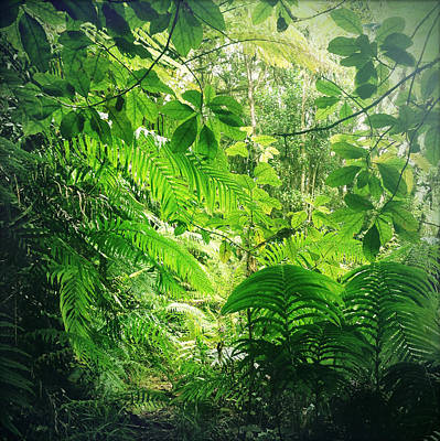 Jungle Leaves Print by Les Cunliffe