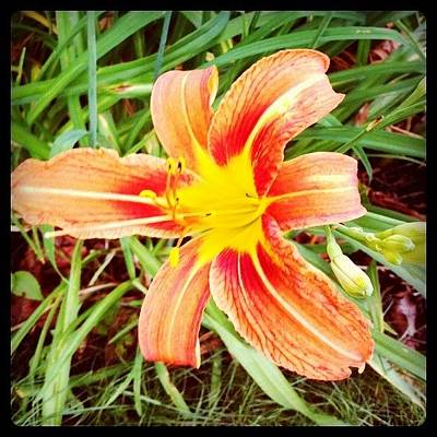Lilies Photograph - Lily by Emily B
