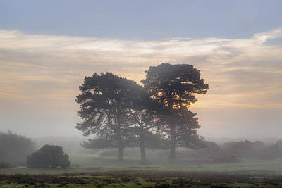 Herbst Photograph - New Forest - England by Joana Kruse