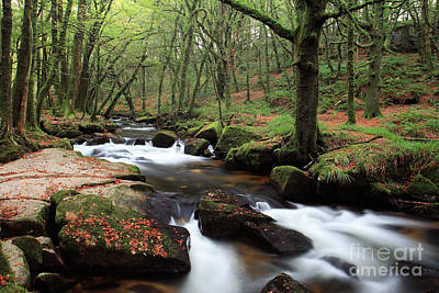 Autumn At Golitha Falls Print by Carl Whitfield