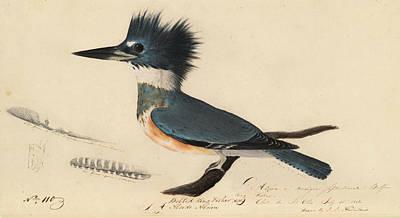 Belted Kingfisher Print by John James Audubon