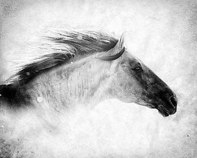Photograph - Chase The Wind by Ron  McGinnis