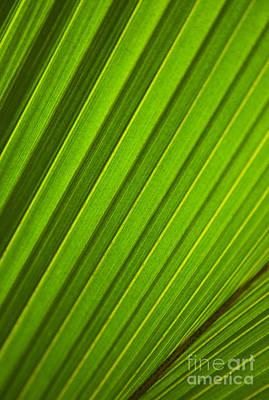 Photograph - Coconut Palm Leaf by Dana Edmunds - Printscapes